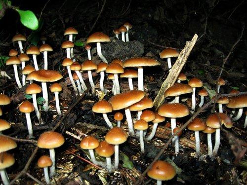 magic-mushroom-1